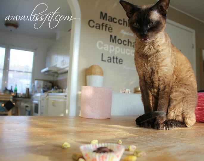 katten vil ha nyttig godis protein tryfflar pistasch mandel yacon choklad ala lissfit