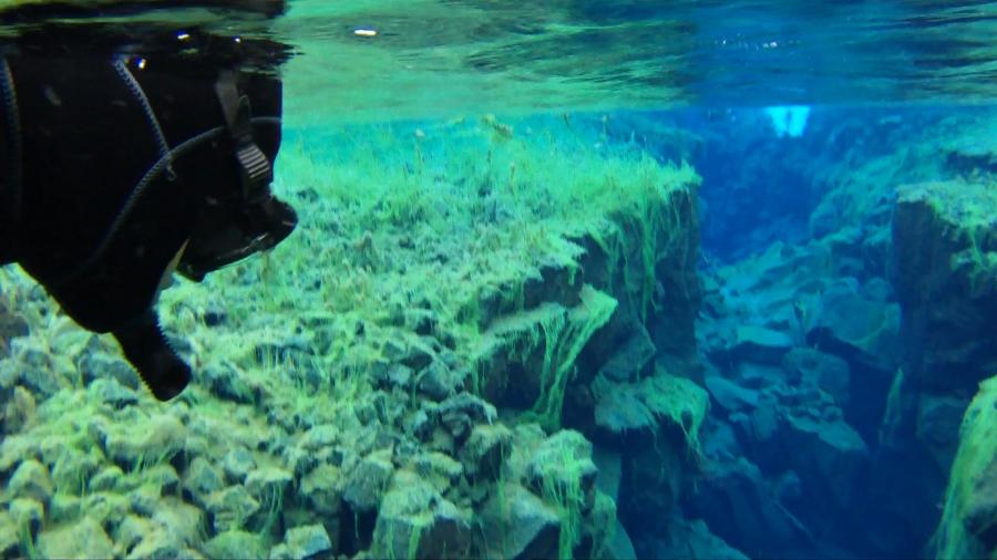 Island: Snorkling mellan 2 kontinenter i Silfra'sglaciärvatten