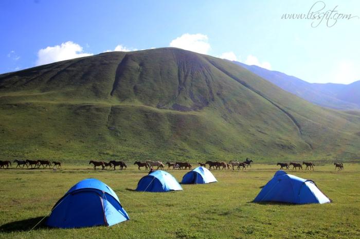 base camp herders horses lissfit