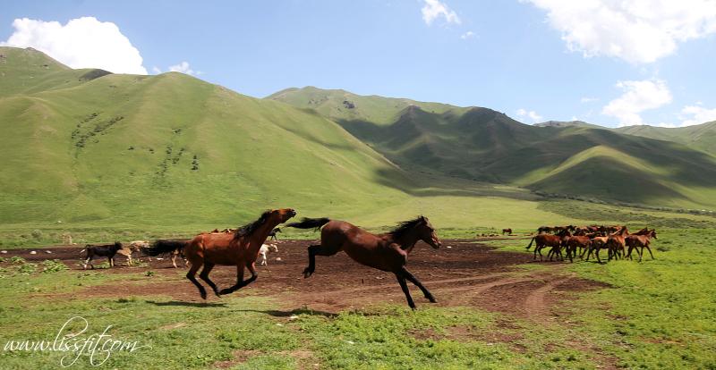 kirgizistan horses lissfit