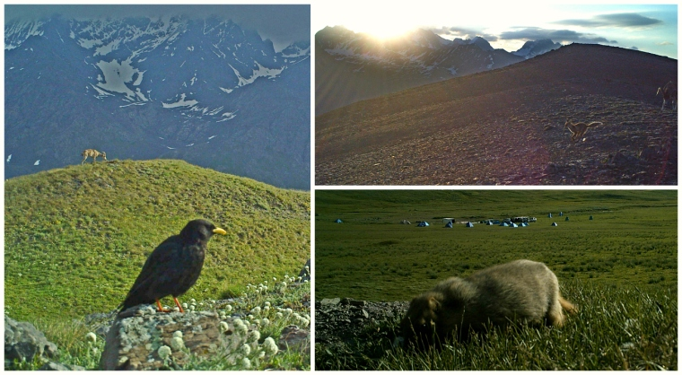 kyrgyzstan animals birds camera traps