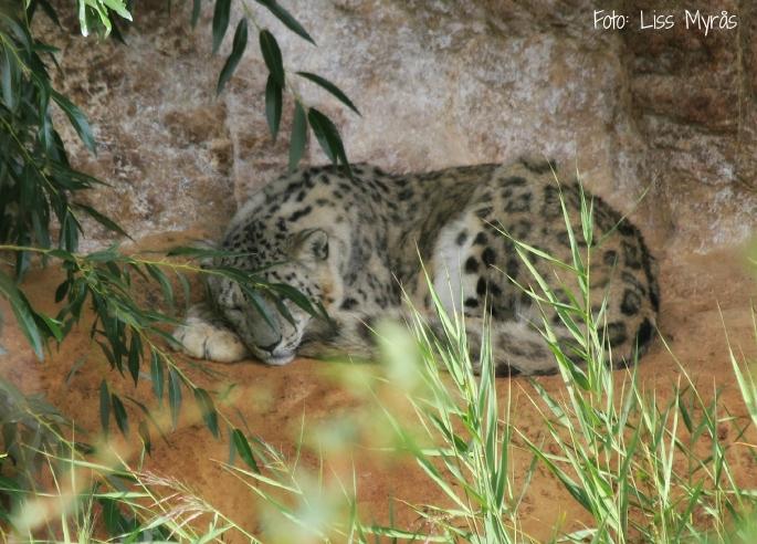 beauty sleep  (wild animal rehabilitation center)
