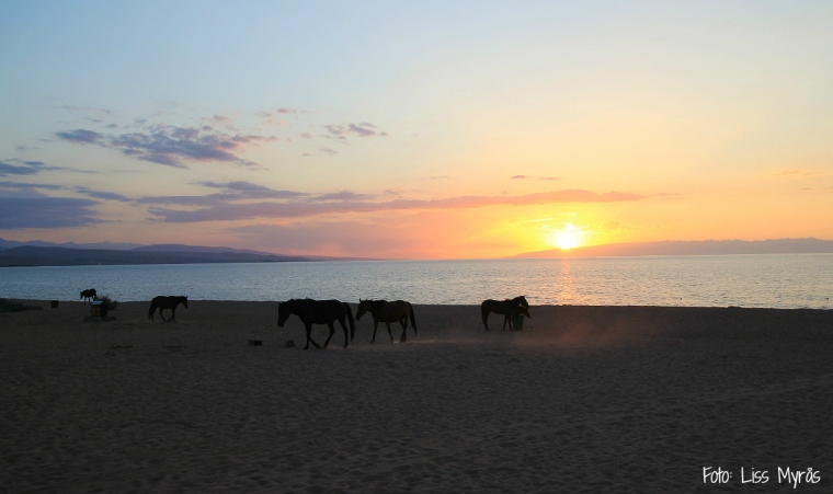 horses issyk kul lake sunset