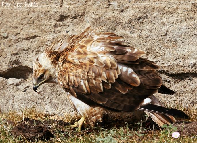 kirgizstan birdie eating lunch liss