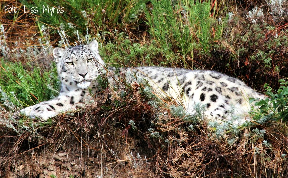 resting beauty ( wild animal rehabilitation center)
