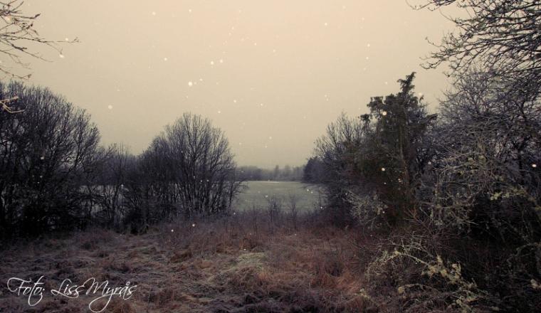 foto liss myrås vinterlandskap sverige