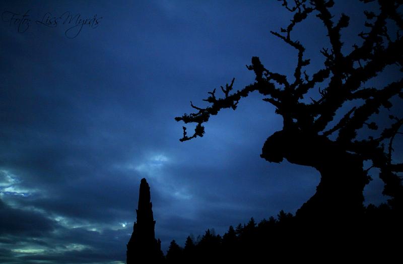 spooky nature foto liss myrås shadows trees