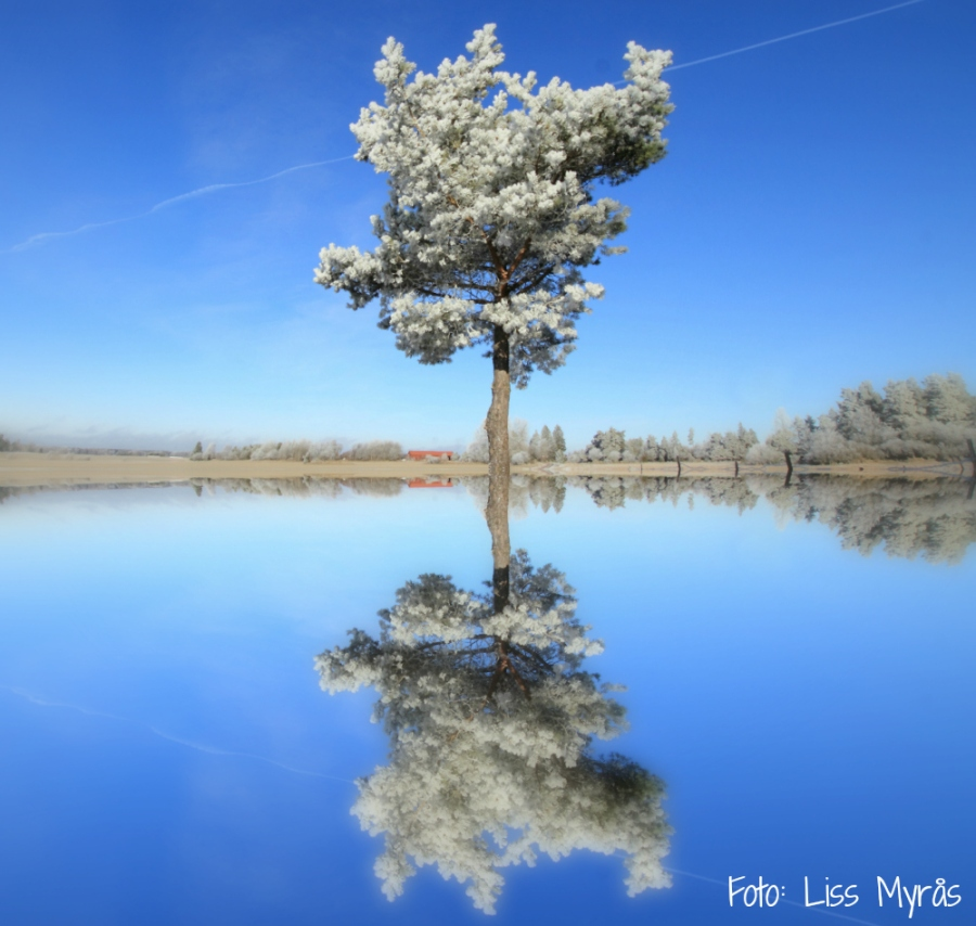 sweden frosty winter landscape experiment photo liss myrås