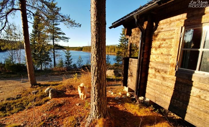 lillsjön myckelgensjö fiske norrland ångermanland övernattingsstuga stugor