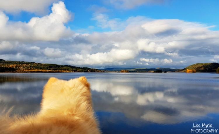 agnsjön sweden lake finsk lapphund puppy norrland