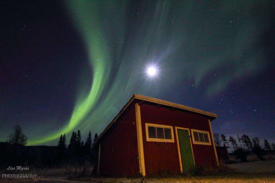 Aurora Borealis in mycourtyard