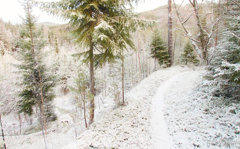 lappmarksvägen vandringsled vinterlandskap winter örnsköldsvik