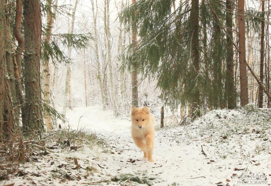Lappmarksvägen winter hike