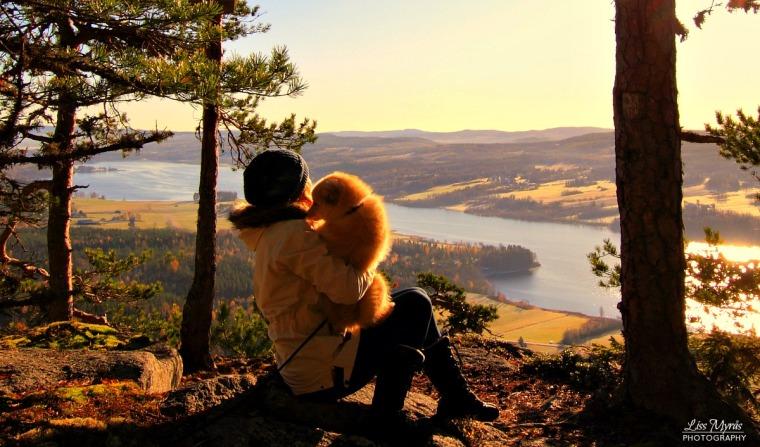 pokerhyllan sverige viewpoint hiking lapphund panorama sweden norrland landscape