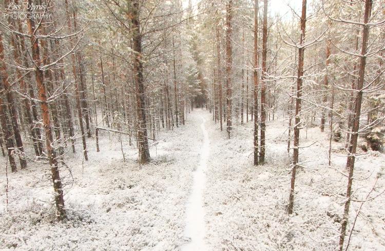 winter landscape forestsnow hiking trail vandringsled västernorrland