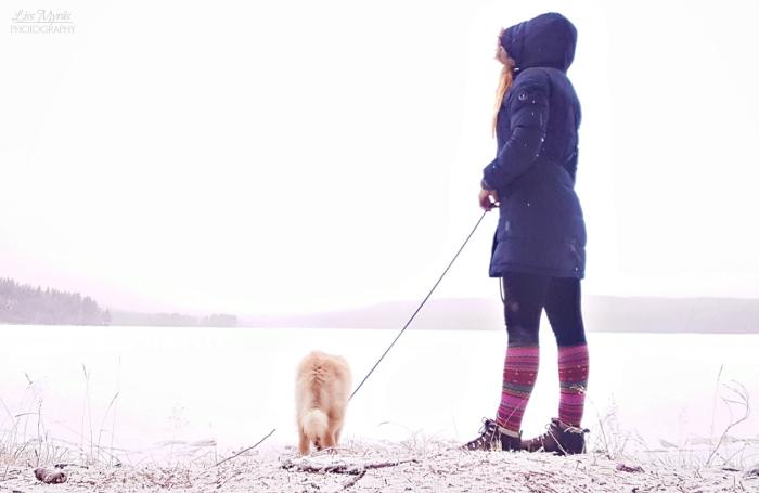 sweden winter landscape örnsköldsvik stor åskasjön bredbyn lapphund foto liss myrås