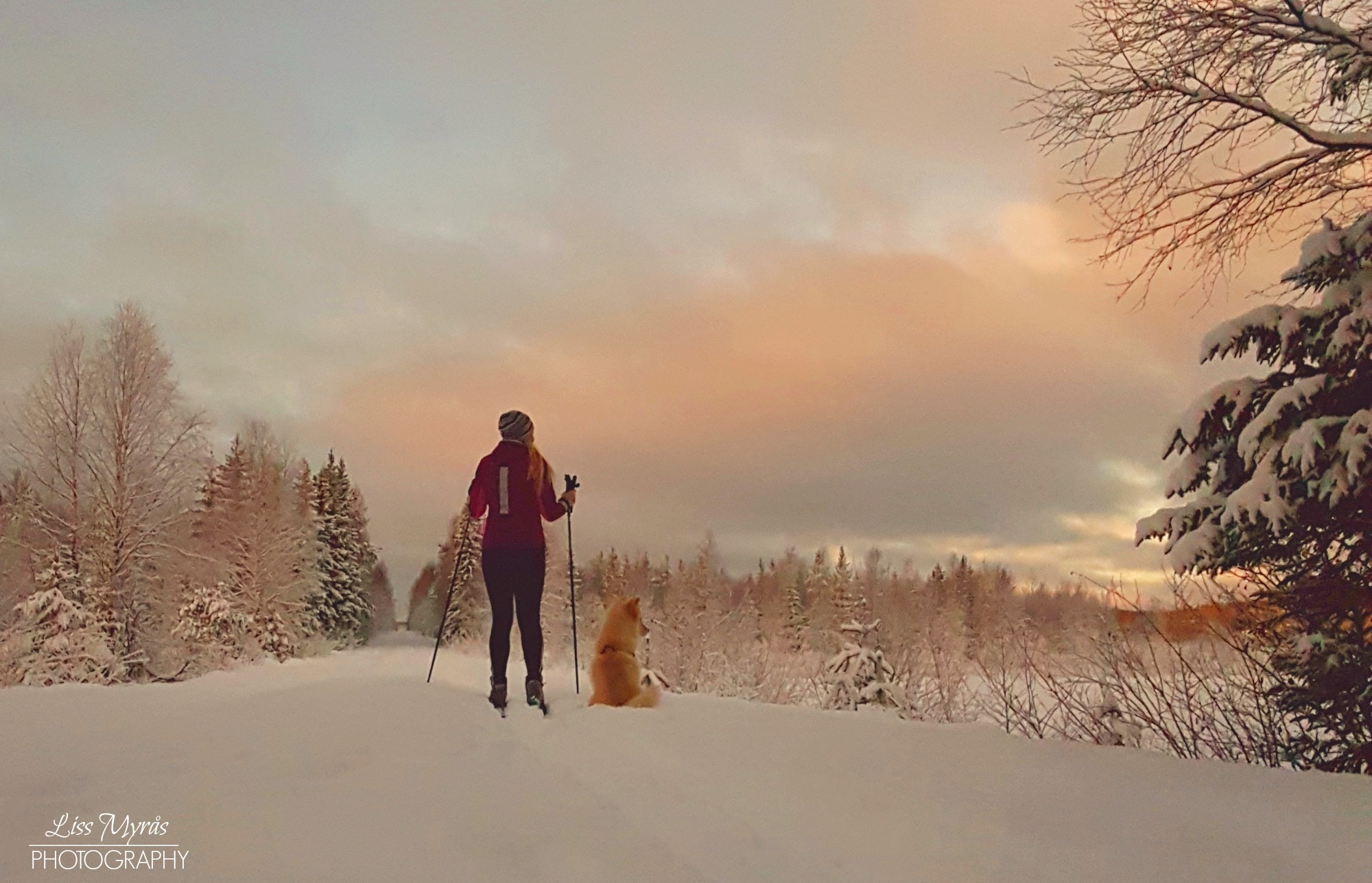 cross country skiing skitur sweden örnsköldsvik winter wonderland lapphund lake frozen snow skispår track sunset bredbyn
