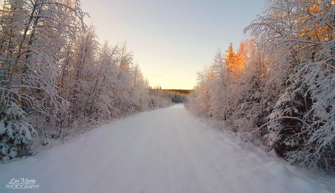 norrland winter wonderland landscape cross-country skiing skitur längdåkning längdskidor skiddpår track snow