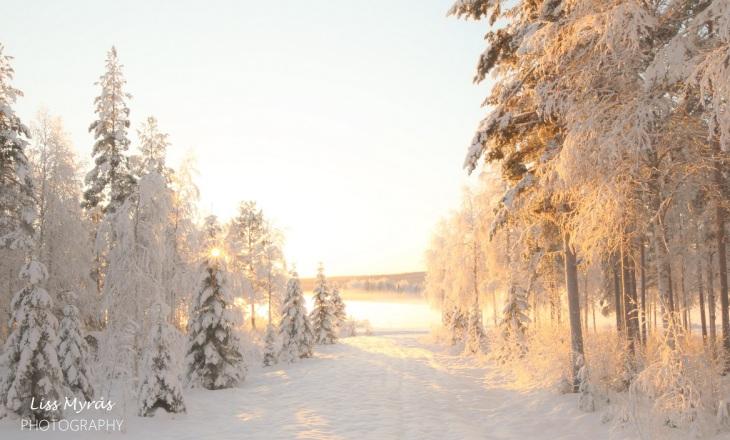 vinter landskap nordic forest winter landscape skiing scandinavia nature outdoors