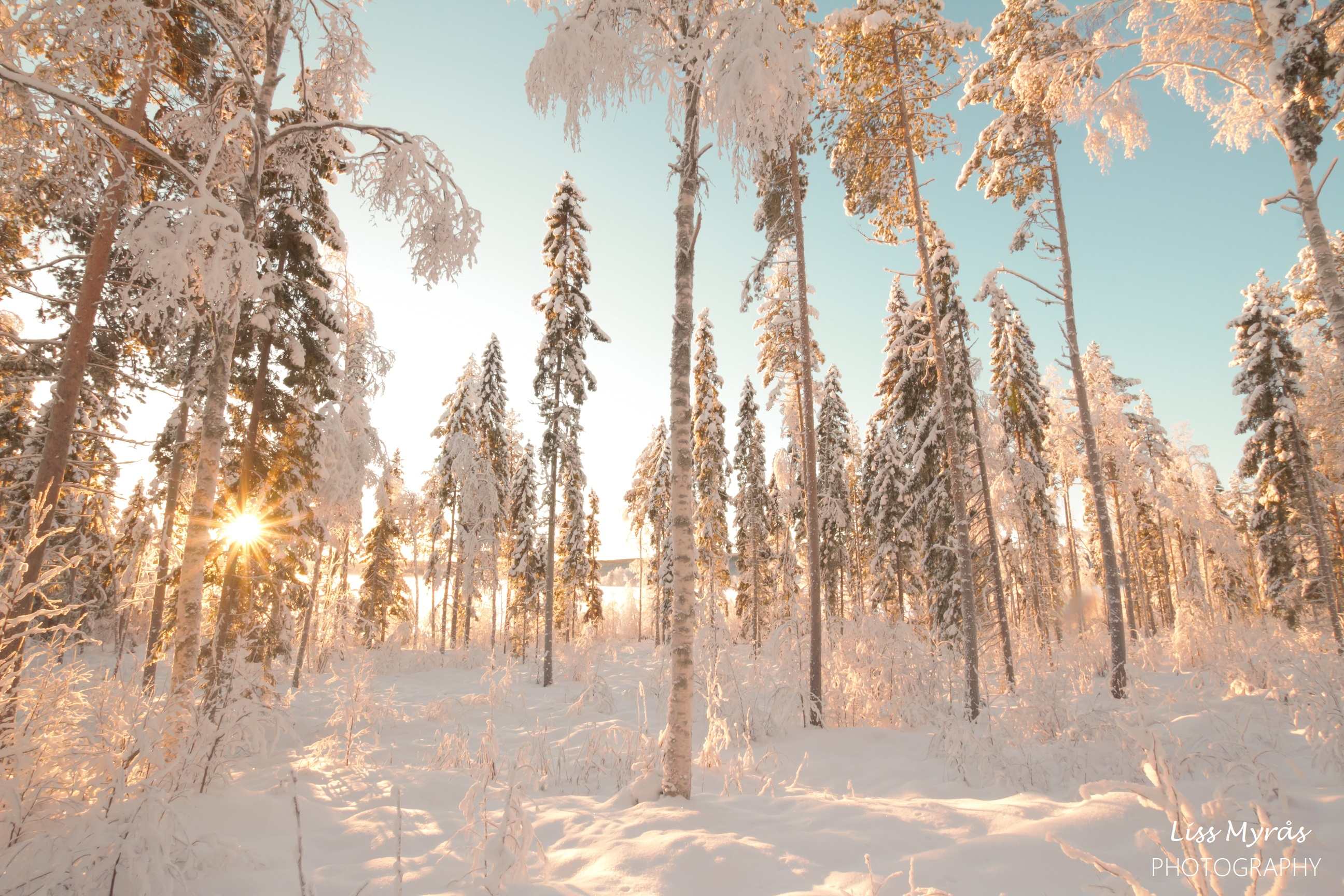 vinter landskap fores winter landscape skiing scandinavia nature outdoors