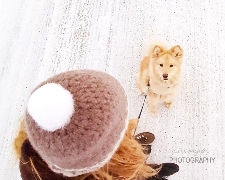lapphund woolk beanie handmade felted tovning tovet