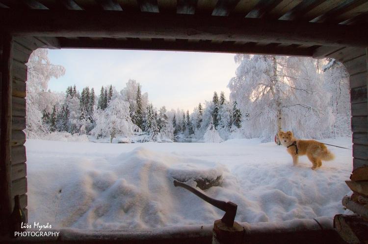 gapahuk shelter wind shield finsk lapphund snow landscape axe river bredbyn