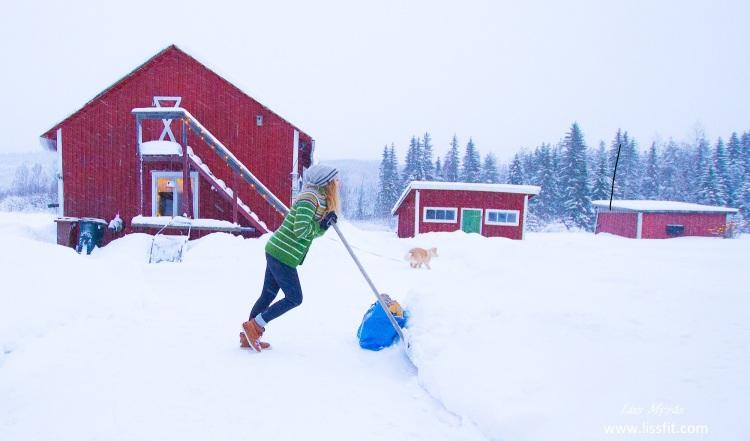 snow landscape farm house sweden norrland bredbyn shoveling frost lapphund hardwork workout