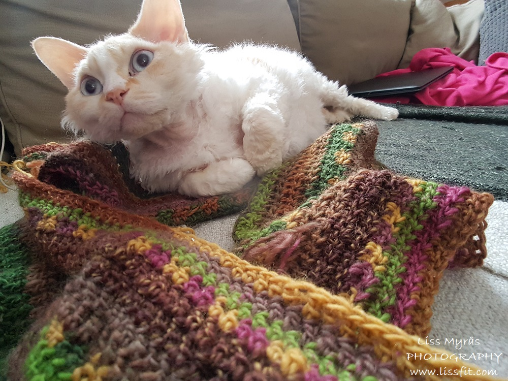 crochet intifiny shawl cowl earth dye hekling virkat cat devon rex