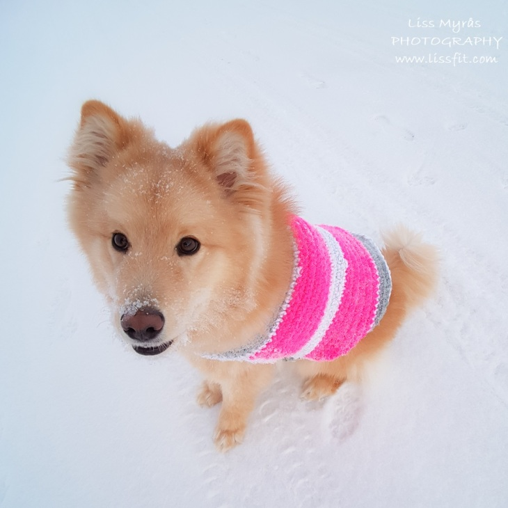 dog vest sweater reflex pink handmade crochet sweet