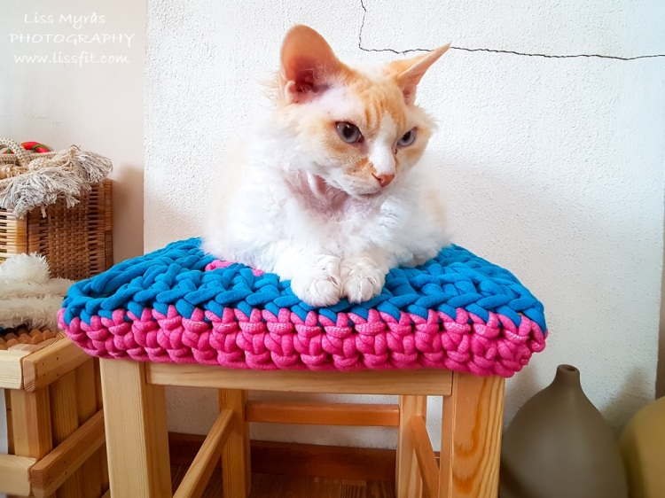 crochet stool cover granny square devon rex cat