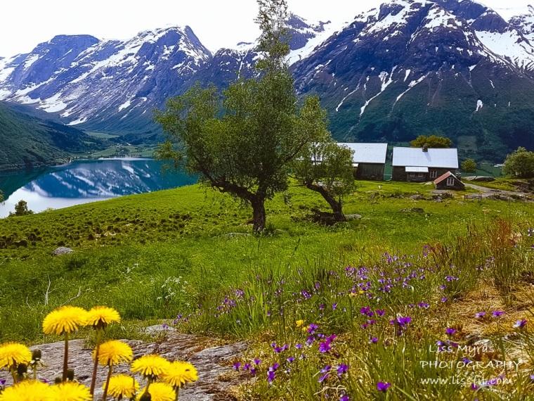 Segestad mountain farm oppstrynsvatnet