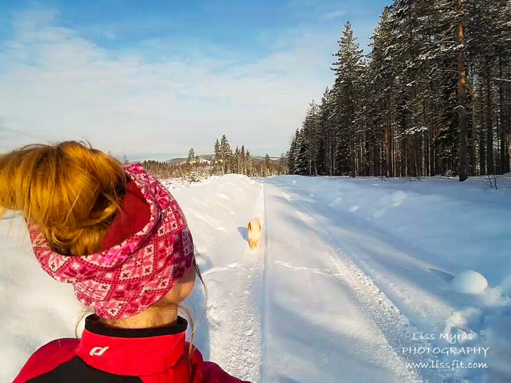 winter run fluffy snow lapphund trail road winderwonderland runner cardio workout