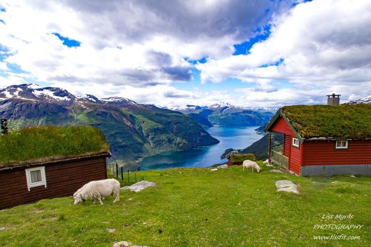 nysetra nysaetra hiking fjords mountains valldal tafjorden cabins seter mountain pasture visit norway travel