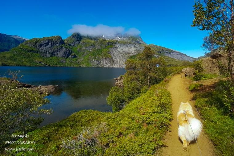 Munkebu hiking trail Lofoten Moskenes lapphund