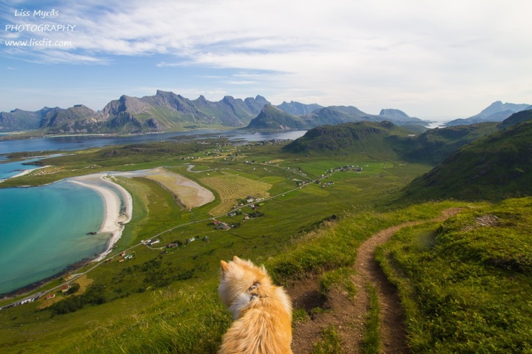 Yttersandheia Lofoten Fredvang beach landscape photography hike landscape lapphund