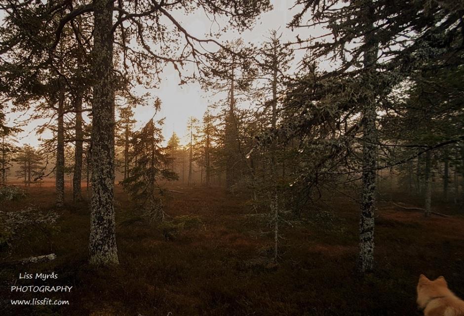 Forest hike enchanted tarn dog lapphund misty