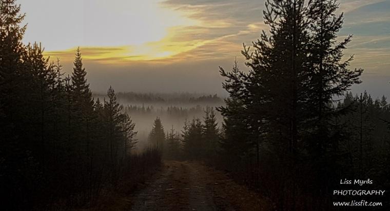 Misty fog enchanted nature landscape old forest tarn finsk lapphund dog