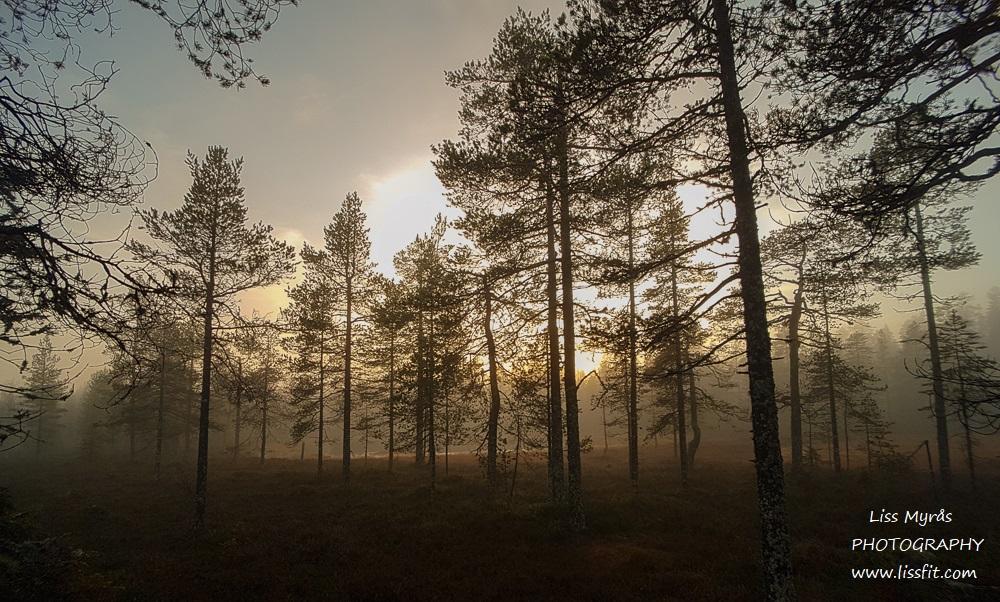trollsk natur tjärn tjern lake forest skogstur mist tåke dimma