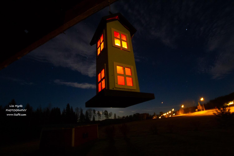 bird solar light night