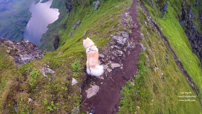 lapphund dog hiking norway lofoten landscape