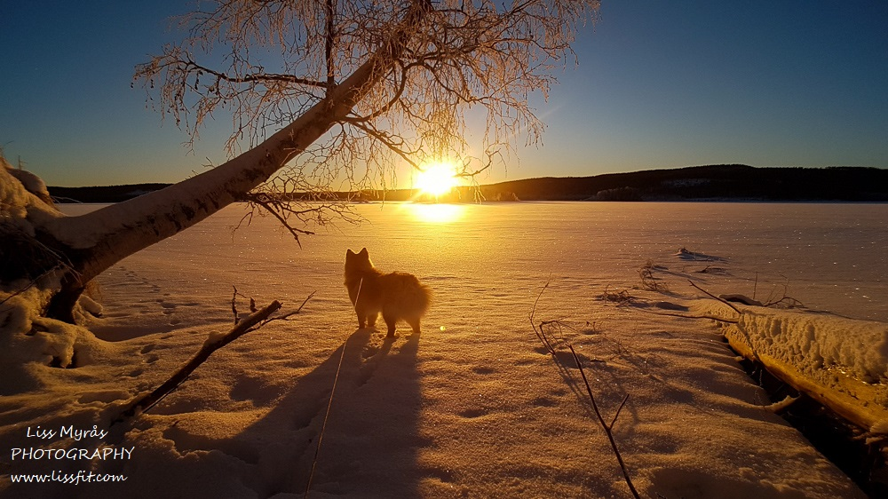 lapphund frozen lake landscape winter wonderland sunset photography