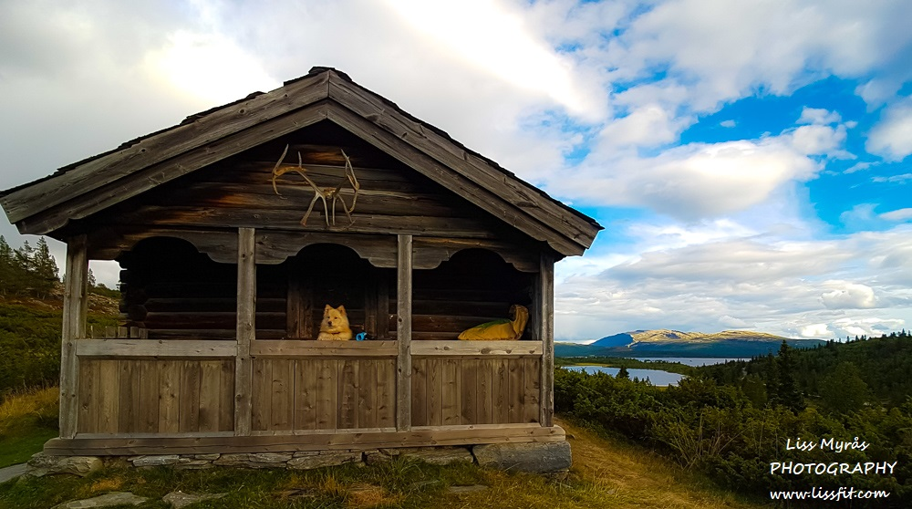 mysusaeter rondane mountain pasture travel pet friendly cabin lapphund norge