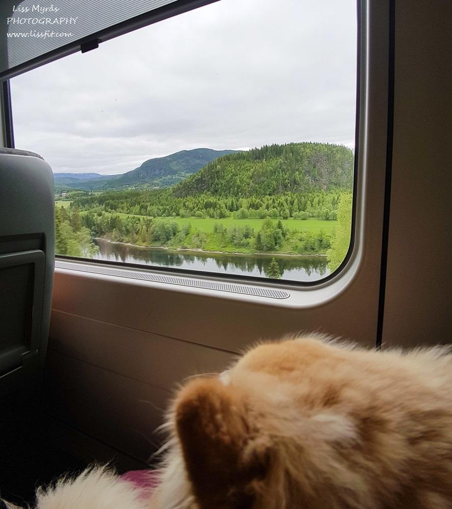 nordlandsbanen train trip norther norway railway travel dog