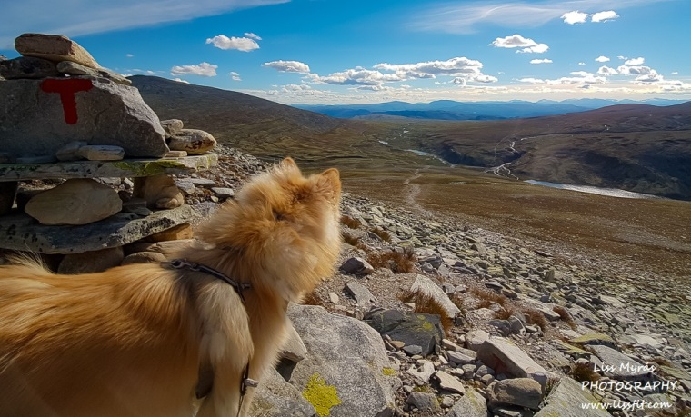 norway rondane hiking dog rondane dnt rondvassbu travel