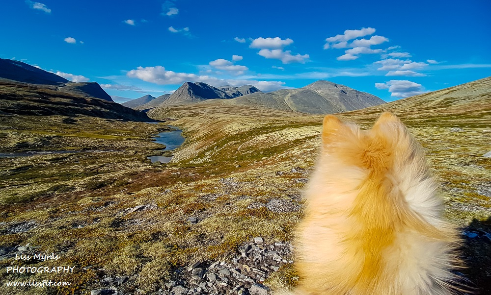 Rondane national park hiking dog lapphund photography norsk landskap