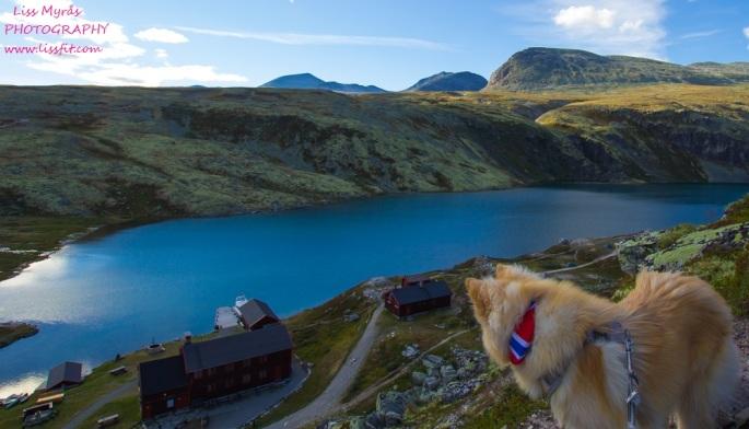 rondvassbu rondane rondvatnet lake dnt cabin landscape beauty norwegian landscape