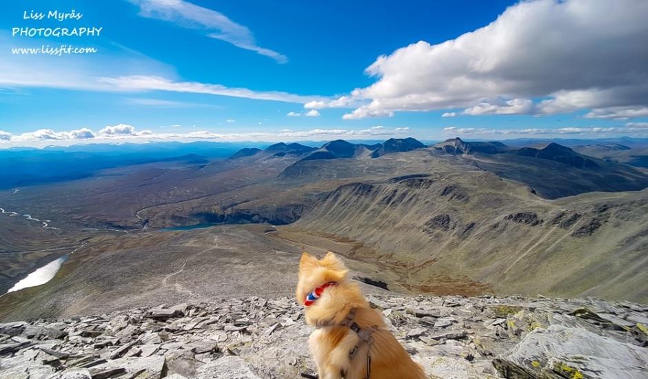 storronden rondane topptur hiking dog climb panoramic scenic view lapphund norway travel