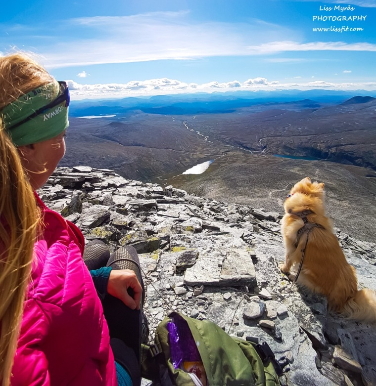 Storronden Rondvassbu hike climb lapphund Rondane