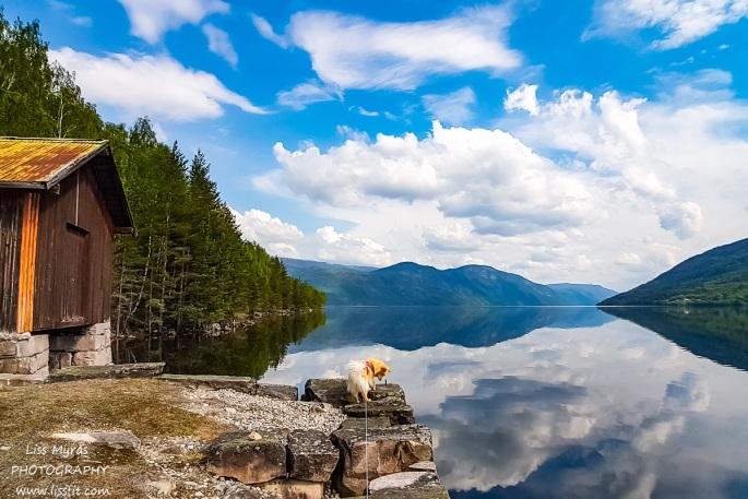 Tinn Telemark lake boat house tinnsjo Tinnlandscape nature finsk lapphund dog