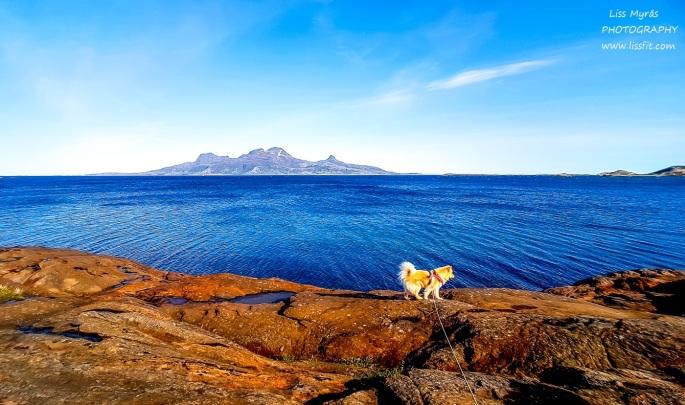 Landegode Geitvaagen Nordnorge landscapenature ocean lapphund bodo
